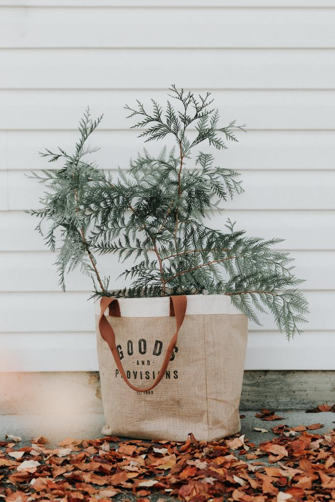 evergreen planted in a burlap reusable hand bag